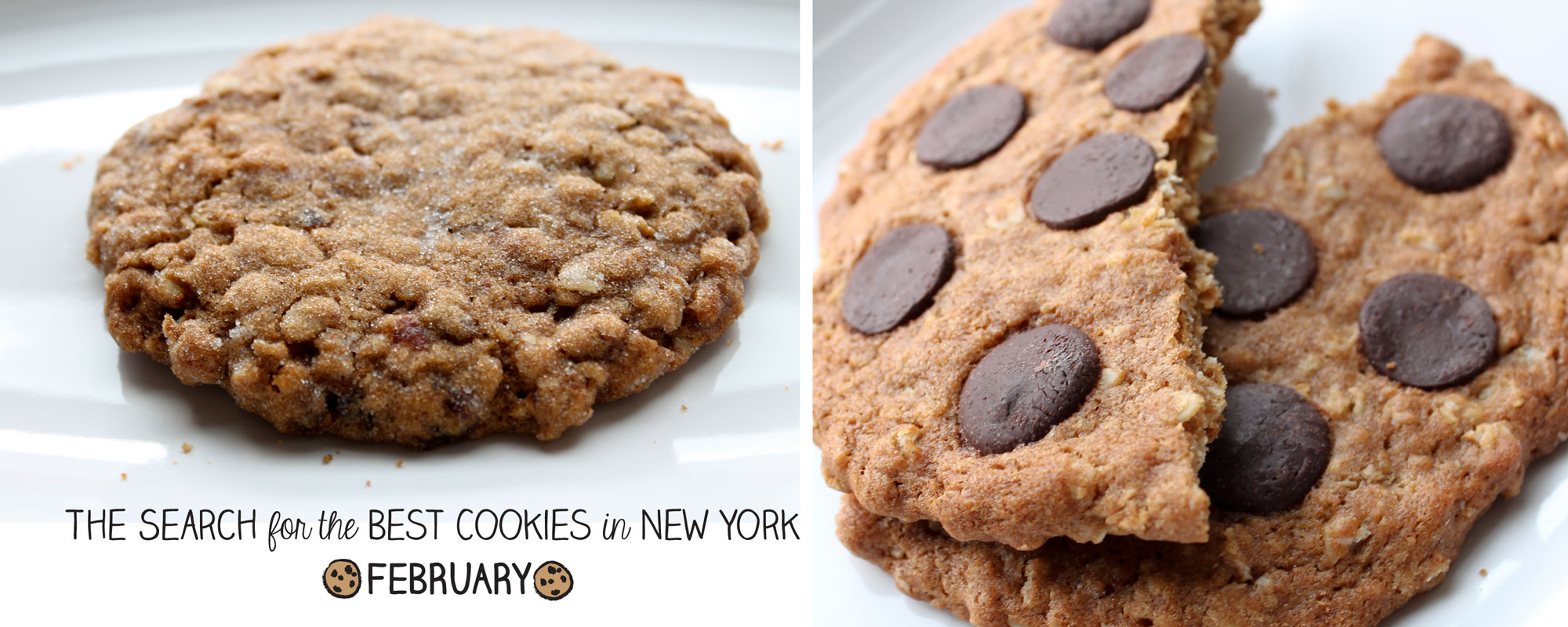 new york cookie search